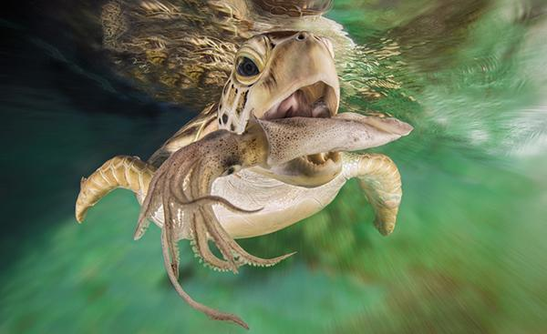 """""""Fast(sea)food"""" by Christian Miller"""