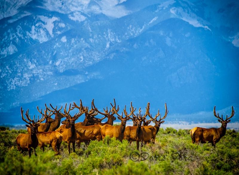 """Today's Photo Of The Day is """"Lots Of Antlers"""" by Doris Ford. Location: Great Sand Dunes National Park and Preserve, Colorado."""