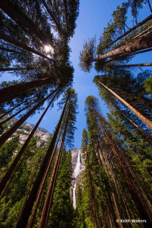 """Today's Photo Of The Day is """"Yosemite Falls And Yosemite Sequoia Trees"""" by Keith Walters"""