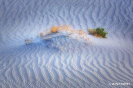 "Today's Photo Of The Day is ""Desert Color"" by Michael Swindle."