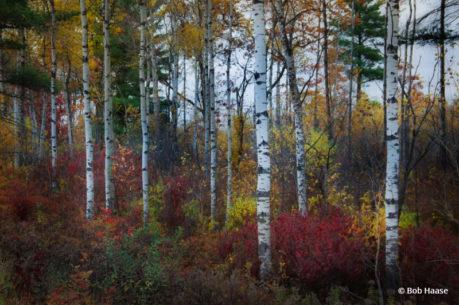 """Today's Photo Of The Day is """"Accents Of Fall"""" by Bob Haase. Location: Hazerhurst, Wisconsin."""