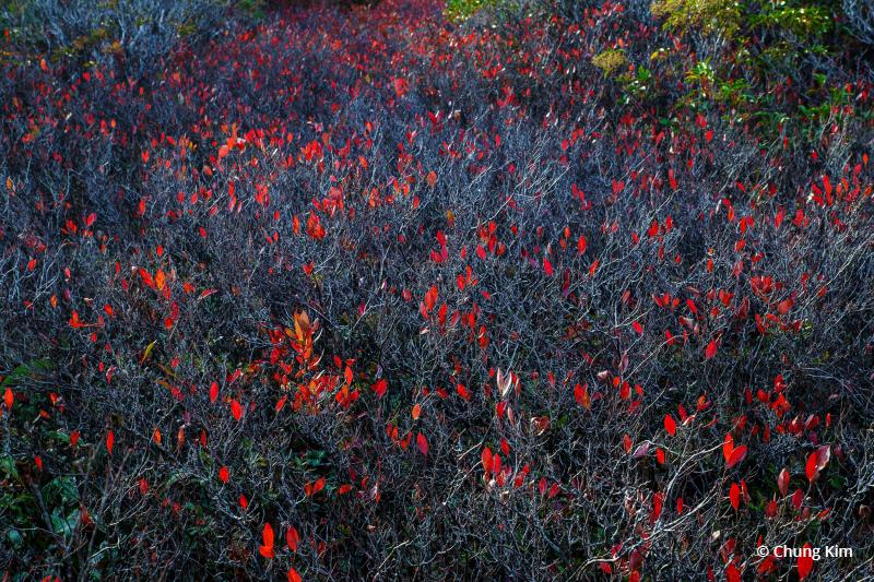 "Today's Photo Of The Day is ""Crimson Flags"" by Chung Kim. Location: Dolly Sods Wilderness, West Virginia."