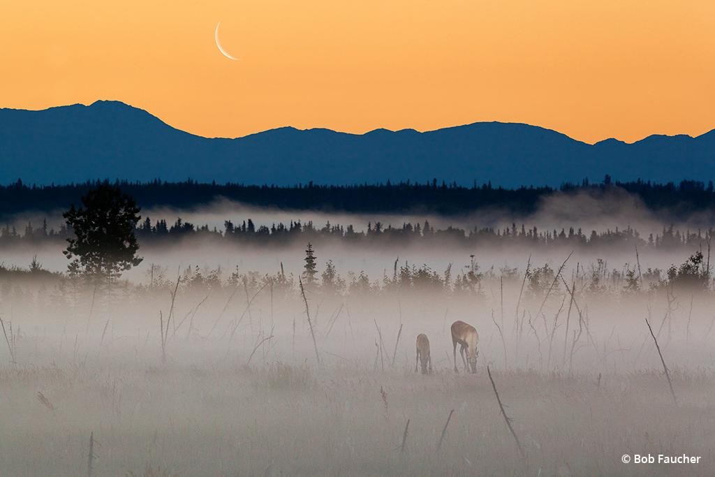 Behind The Shot: Foggy Dawn By Bob Faucher, Kenai National Wildlife Refuge, Alaska