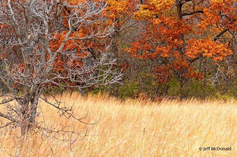 "Today's Photo Of The Day is ""Autumn Meadow"" by Jeff McDonald. Location: Kettle Moraine State Forest, Eagle, Wisconsin."