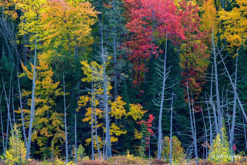 "Today's Photo Of The Day is ""Group Of Trees"" by Jeff Stasney. Location: Keweenaw Peninsula, Michigan."