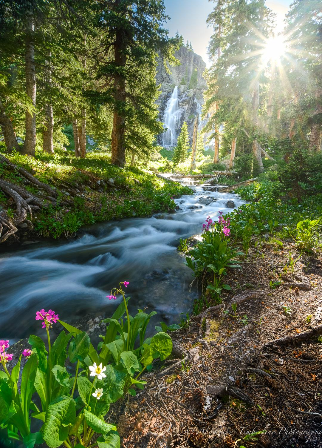 "Today's Photo Of The Day is ""Fairy Tale Stream"" is Jennifer Renwick. Location: Ice Lakes, Colorado."