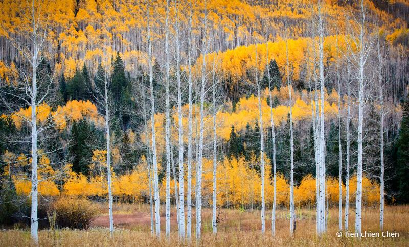 "Today's Photo Of The Day is ""The Brotherhood"" by Tien-chien Chen. Location: Aspen, Colorado."