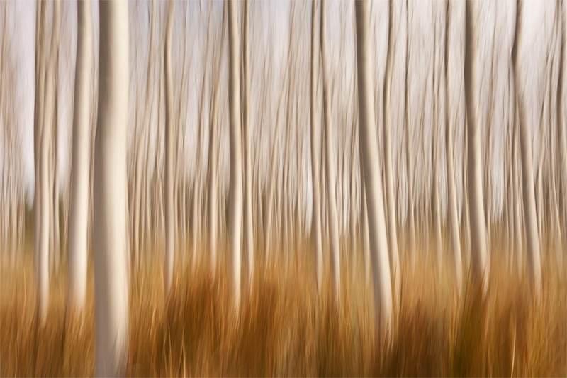 """Congratulations to David Frutos for winning the recent Motion Blur assignment with his image, """"Spring Impressions in a Poplar Field."""""""