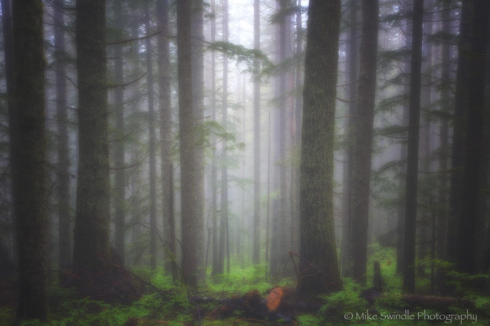 """Today's Photo Of The Day is """"Foggy Forest"""" by Michael Swindle. Location: Columbia River Gorge, Oregon."""