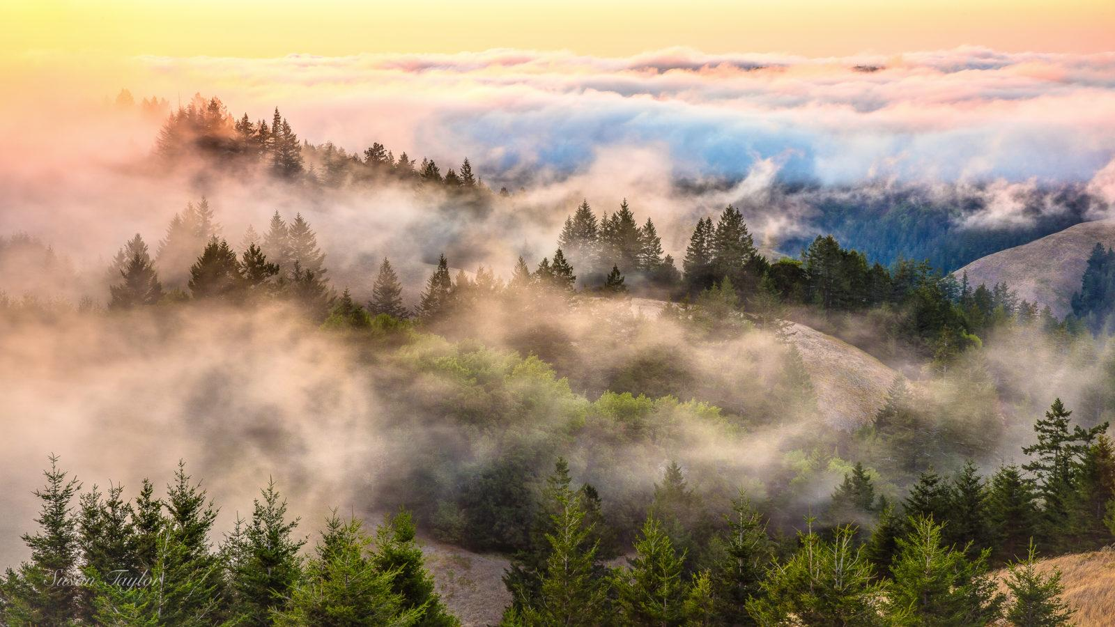 """Today's Photo Of The Day is """"Coastal Fog Over Mount Tamalpais"""" by Susan Taylor. Location: Mount Tamalpais State Park, CA."""