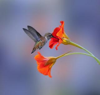 "Congratulations to Denis Dessoliers for winning the recent Beautiful Bokeh Assignment with the image, ""A Little Bird."""