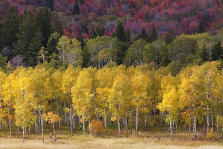 Today's Photo Of The Day is Autumn Afternoon by Debbie O'Dell. Location: Wasatch Mountains, Utah.