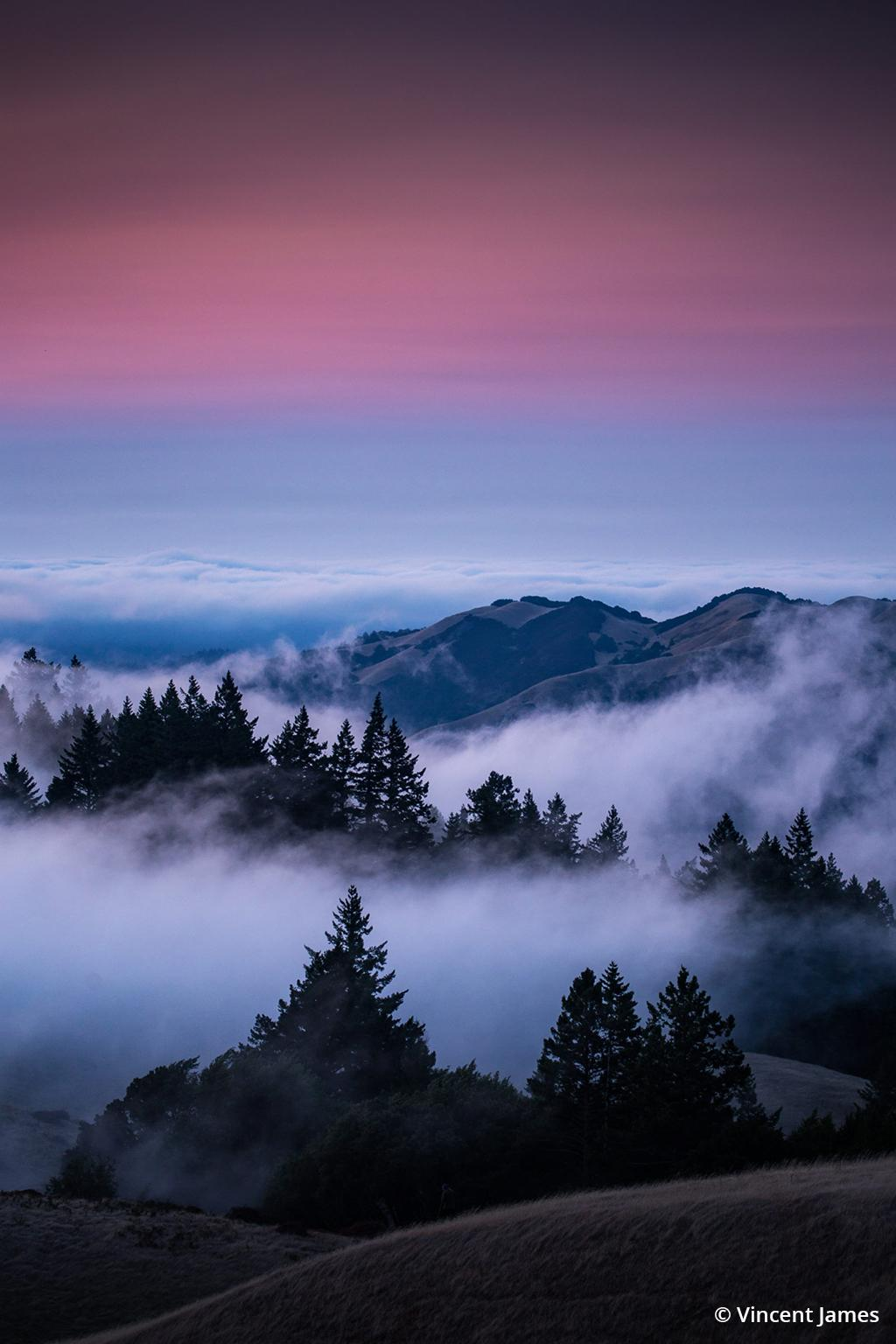 "Today's Photo Of The Day is ""This Must Be Heaven"" by Vincent James. Location: Mount Tamalpais State Park, California."