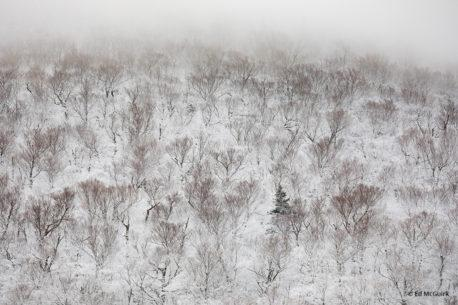 "Today's Photo Of The Day is ""Cannon Mountain Tree Patterns"" by Ed McGuirk. Location: Franconia Notch State Park, New Hampshire."