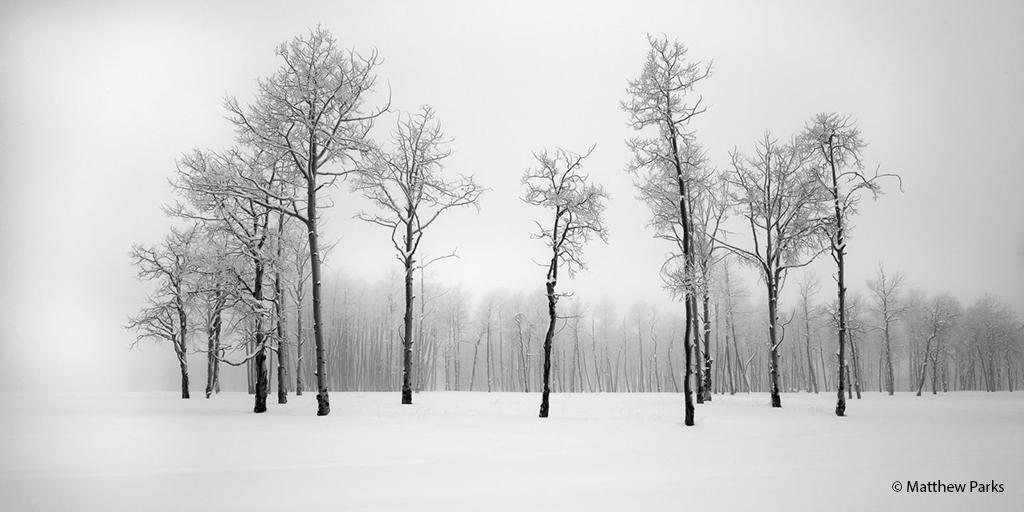 """Today's Photo Of The Day is """"Winter Grove"""" by Matthew Parks. Location: Ridgway, Colorado."""