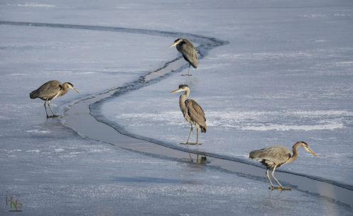 "Today's Photo Of The Day is ""Ice Fishing"" by Stacy Howell. Location: Farmington Bay Wildlife Management Area, Utah."