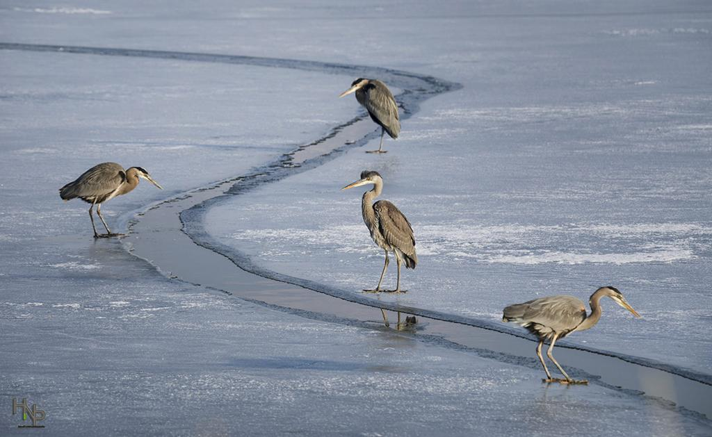 """Today's Photo Of The Day is """"Ice Fishing"""" by Stacy Howell. Location: Farmington Bay Wildlife Management Area, Utah."""