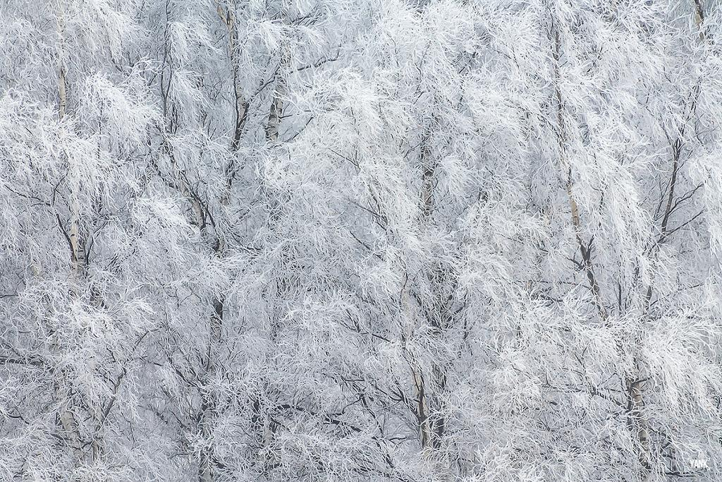 """Congratulations to photographer YANK for winning the recent Patterns Of Winter Assignment with the image, """"Frosty Dance."""""""
