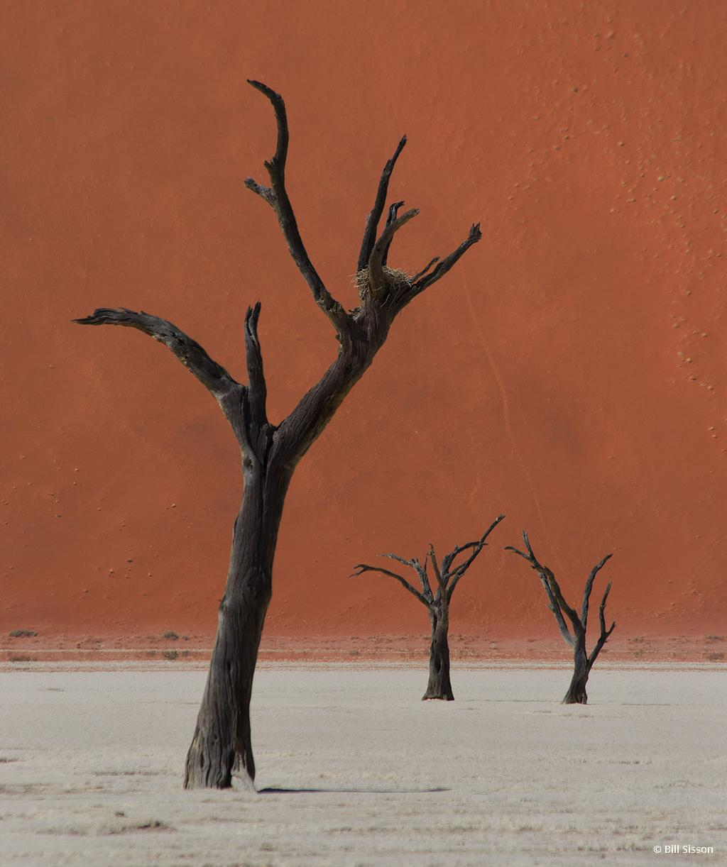 "Today's Photo Of The Day is ""Desert Ballet with Birds Nest"" by Bill Sisson. Location: Deadvlei, Namib Desert, Namibia."