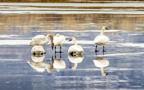 """Today's Photo Of The Day is """"Perfect Protected Place"""" by David Rein. Location: Summer Lake Wildlife Area, Oregon."""