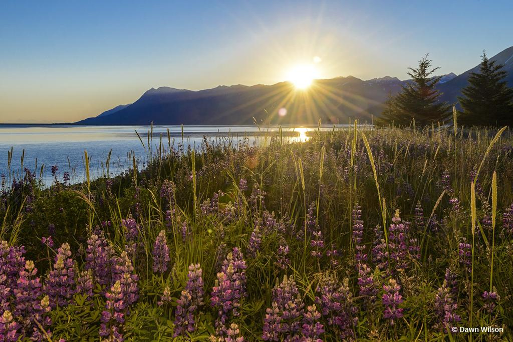 "Today's Photo Of The Day is ""Sunset on Turnagain Arm"" by Dawn Wilson. Location: Alaska."