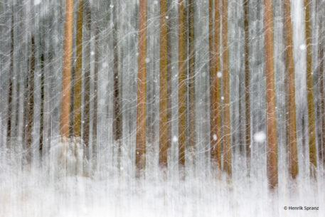 """Today's Photo Of The Day is """"Weave"""" by Henrik Spranz. Location: Upper Austria."""
