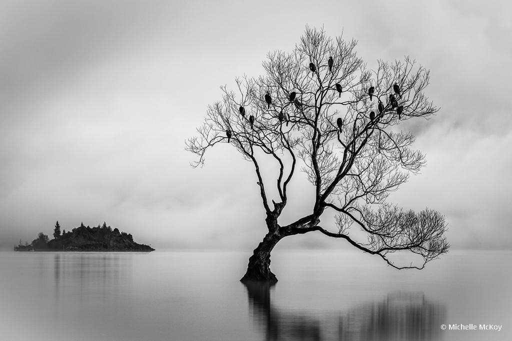 "Today's Photo Of The Day is ""Birds of Lake Wanaka"" by Michelle McKoy. Location: New Zealand."