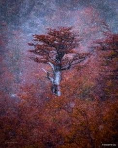 """Today's Photo Of The Day is """"Haiku"""" by Sangeeta Dey."""