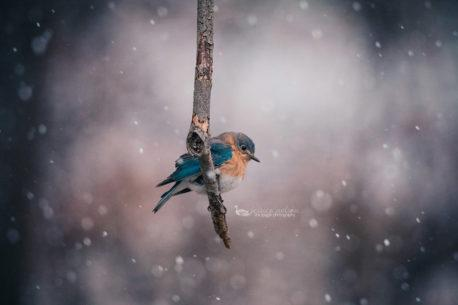 """Today's Photo Of The Day is """"Not This Again"""" by Jessica Nelson. Location: Maryland."""