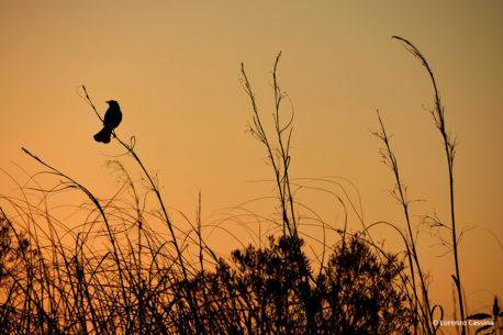 """Today's Photo Of The Day is """"Melody At Dusk"""" by Lorenzo Cassina. Location: Weston, Florida."""