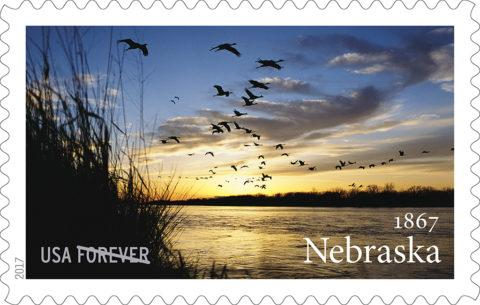 Michael Forsberg's photograph of sandhill cranes was selected by the United States Postal Service as a Forever stamp to celebrate the 150th anniversary of Nebraska statehood. The stamp was dedicated in March at the Nebraska State Capitol. © 2017 U.S. Postal Service.