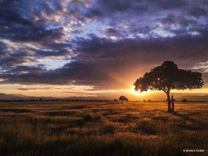 """Today's Photo Of The Day is """"Heart of Africa"""" by Jessica Grant. Location: Mikumi National Park, Morogoro, Tanzania."""