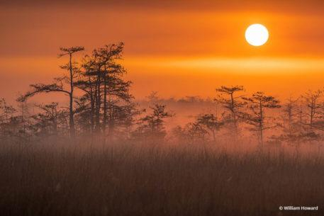"""Congratulations to William Howard for winning the recent Psychology Of Color Assignment with his image, """"Morning Mist in the Everglades."""""""