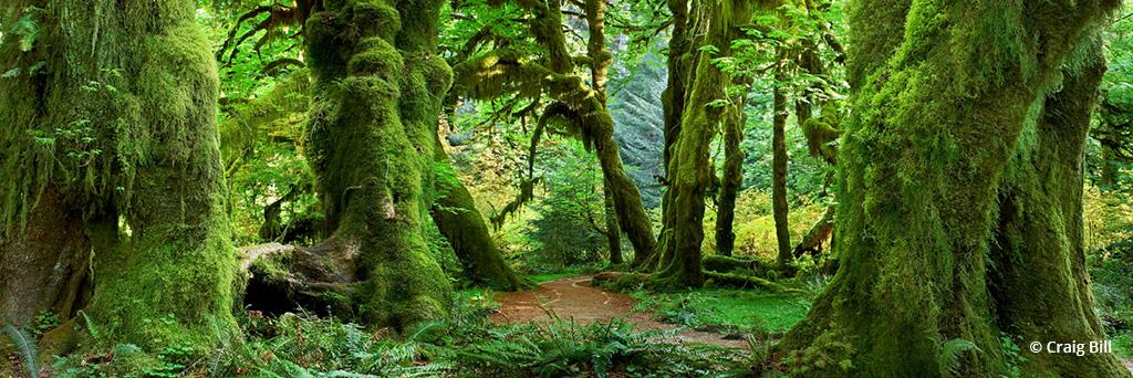 """Today's Photo Of The Day is """"Hall of Mosses"""" by Craig Bill. Location: Washington."""