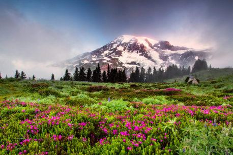"Today's Photo Of The Day is ""First Light on Mt. Rainier"" by Tom Elenbaas. Location: Mt. Rainier National Park, Washington."