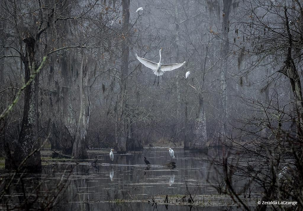 Behind The Shot: Ascension—Cypress Island Preserve, Breaux Bridge, Louisiana