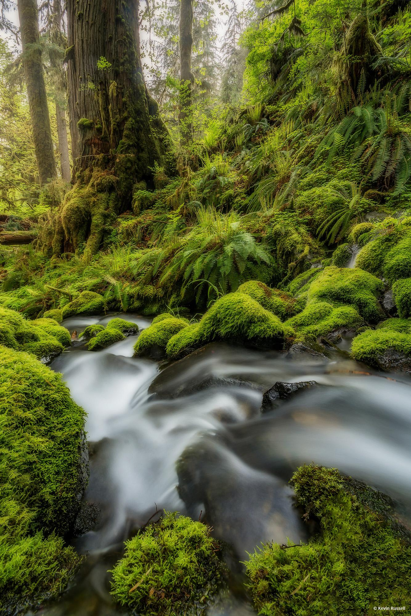 "Today's Photo Of The Day is ""Quinault Flows"" by Kevin Russell. Location: Olympic National Park, Washington."