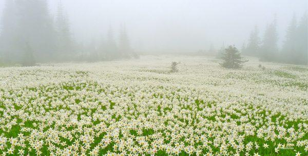 "Today's Photo Of The Day is ""Foggy Blanket"" by RimaS. Location: Olympic National Park, Washington."