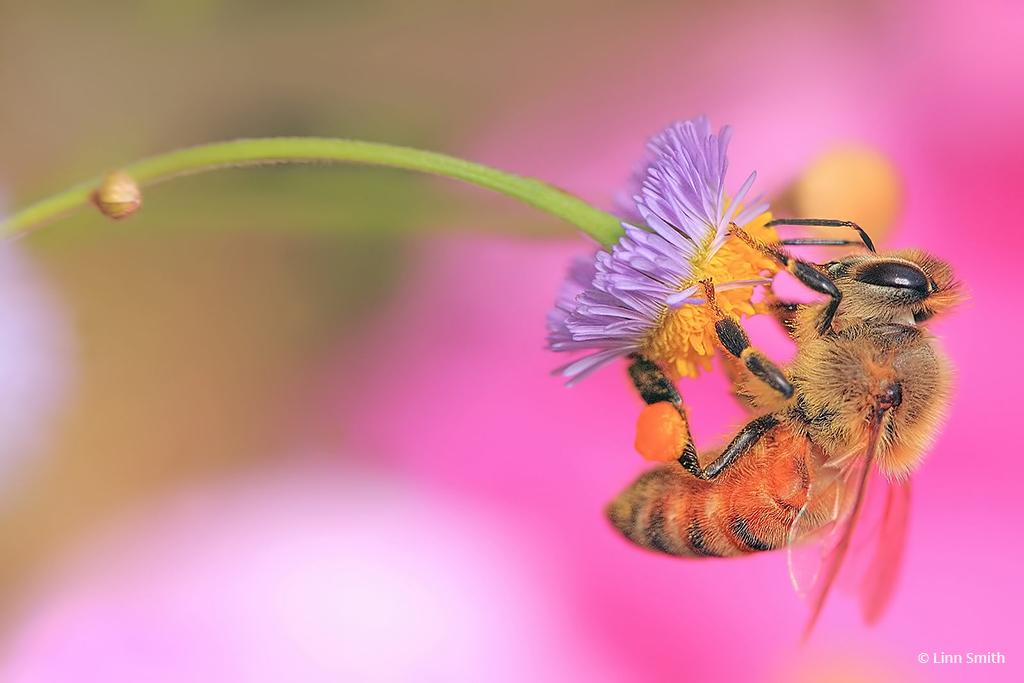 "Today's Photo Of The Day is ""Bee Benefits"" by Linn Smith. Location: Florida."