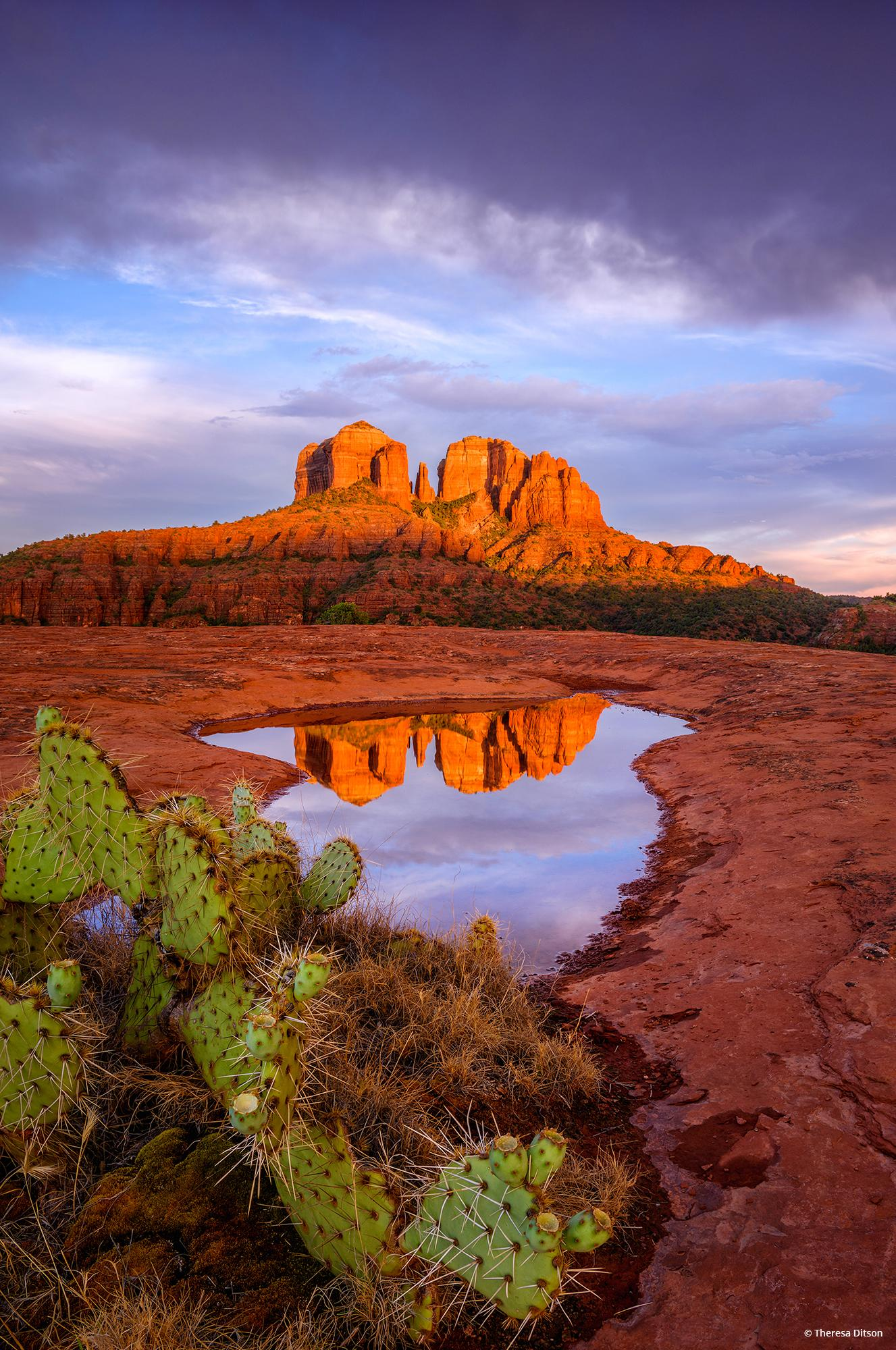 """Today's Photo Of The Day is """"Last Glow On Cathedral Rocks"""" by Theresa Ditson. Location: Sedona, Arizona."""