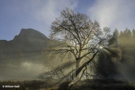 William Neill, Half Dome, Elm and Sunbeams