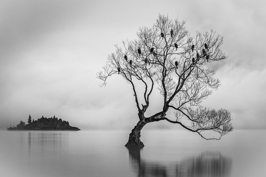 Behind The Shot: Birds Of Lake Wanaka, South Island, New Zealand