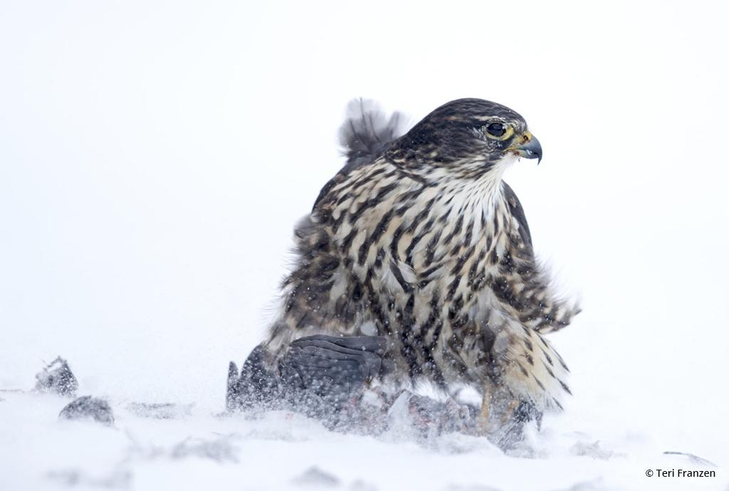 """Today's Photo Of The Day is """"Cold Lunch"""" by Teri Franzen. Location: Johnson City, New York."""