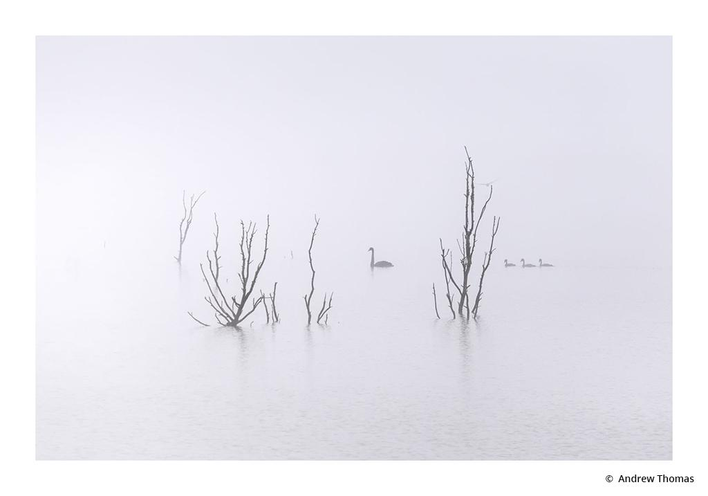 """Today's Photo Of The Day is """"Through the Morning Mist"""" by Andrew Thomas. Location: Lake Burrumbeet, Victoria, Australia."""
