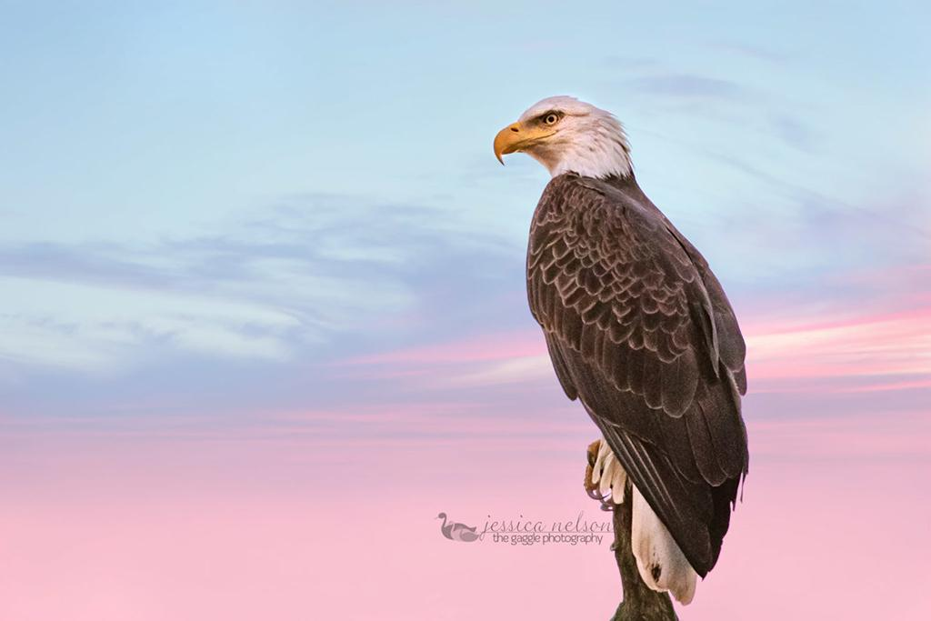 """Today's Photo Of The Day is """"Baldie on my Driveway"""" by Jessica Nelson. Location: Maryland."""