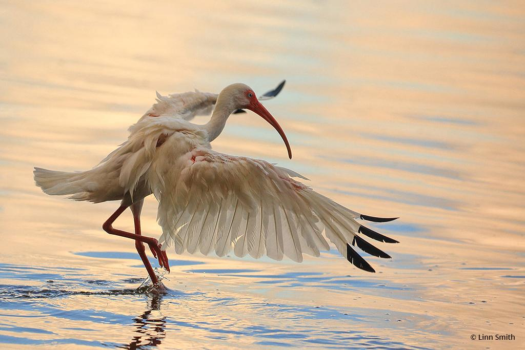 """Today's Photo Of The Day is """"Let's Dance"""" by Linn Smith. Location: Oviedo, Florida."""