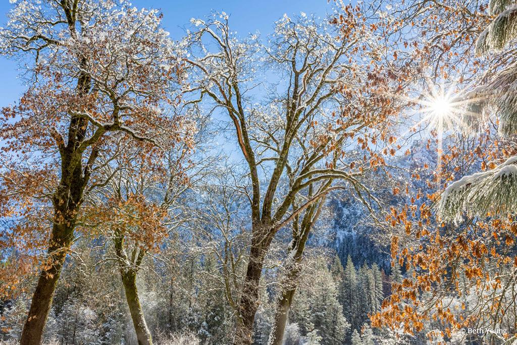 """Today's Photo Of The Day is """"El Capitan Meadow Winter Tapestry"""" by Beth Young. Location: Yosemite National Park, California."""
