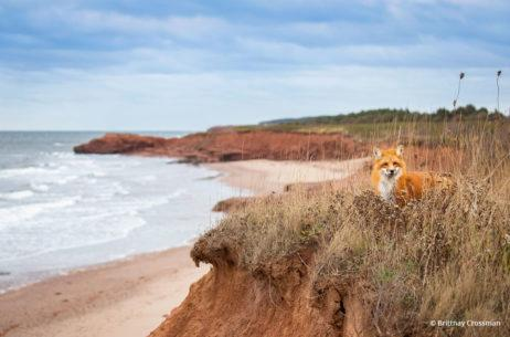 "Today's Photo Of The Day is ""Sanctuary"" by Brittany Crossman. Location: Prince Edward Island, Canada."