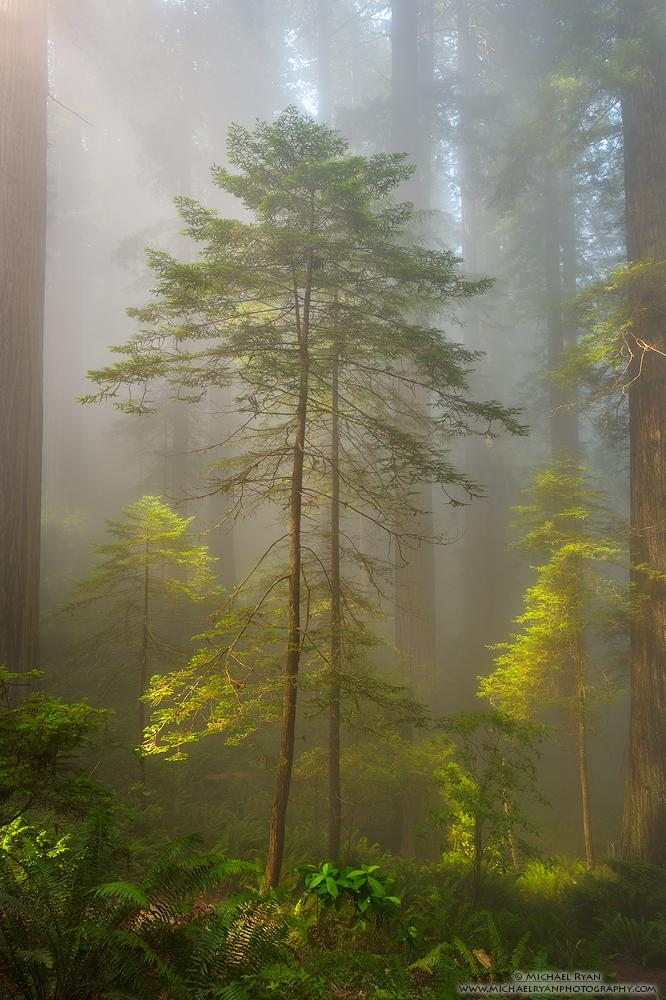"""Today's Photo Of The Day is """"Room to Grow"""" By Michael Ryan. Location: Del Norte Coast Redwoods State Park, California."""