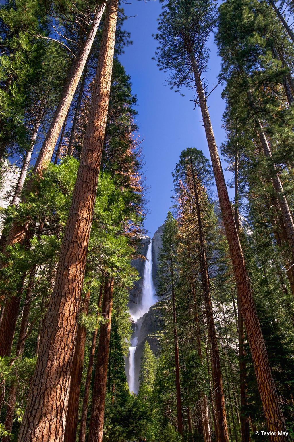 """Today's Photo Of The Day is """"Yosemite Falls Portrait"""" by Taylor May. Location: Yosemite National Park, California."""